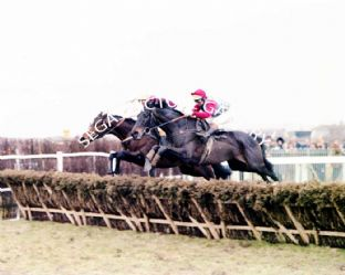 Sea Pigeon with Jonjo Oneill (670-01)